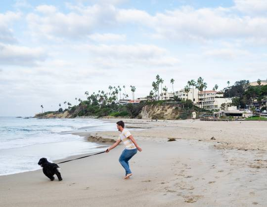 Dog & Pet Friendly Hotels in Laguna Beach California