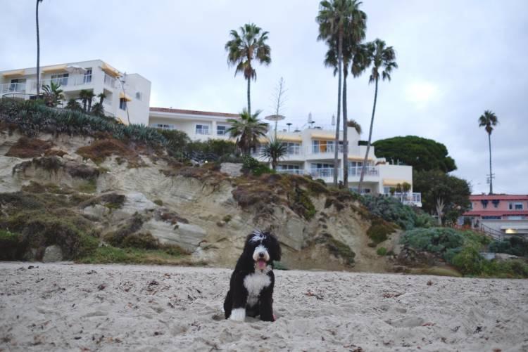 Dog Friendly Trip Planning In Laguna Beach | Visit Laguna Beach