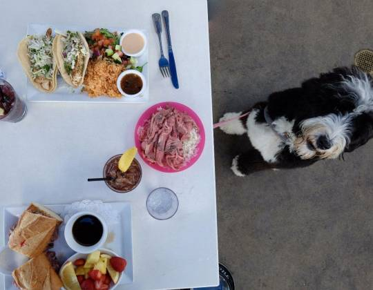 Dog Friendly Laguna Beach Restaurants