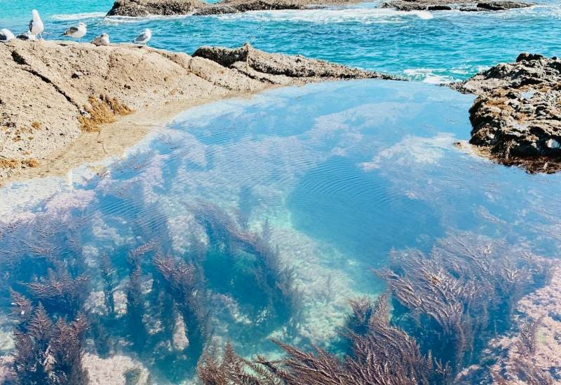Laguna Beach Tide Pools Information