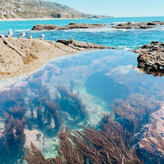 Treasure Island Laguna Beach: Laguna Beach Tide Pools Information